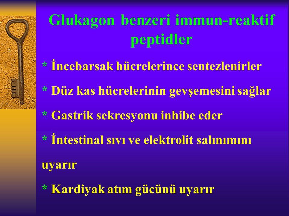 Glukagon benzeri immun-reaktif peptidler
