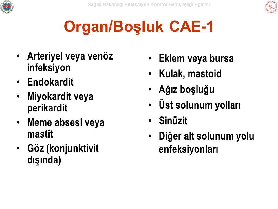 Organ/Boşluk CAE-1 Arteriyel veya venöz infeksiyon Eklem veya bursa