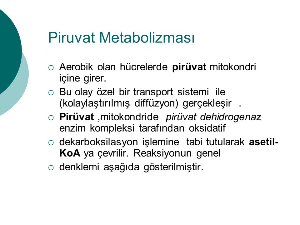 Piruvat Metabolizması