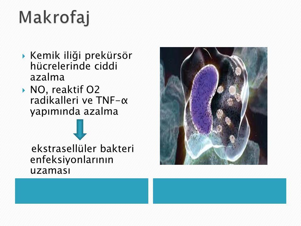 Makrofaj Kemik iliği prekürsör hücrelerinde ciddi azalma