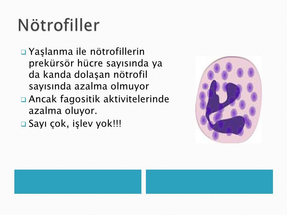 Nötrofiller Yaşlanma ile nötrofillerin prekürsör hücre sayısında ya da kanda dolaşan nötrofil sayısında azalma olmuyor.