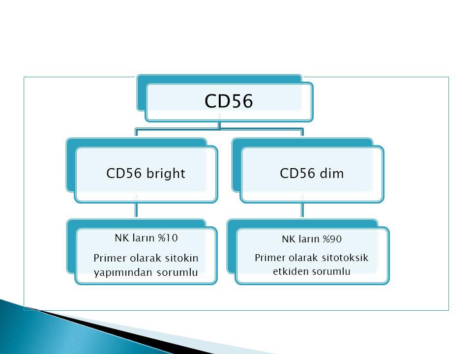 CD56 CD56 bright CD56 dim NK ların %10