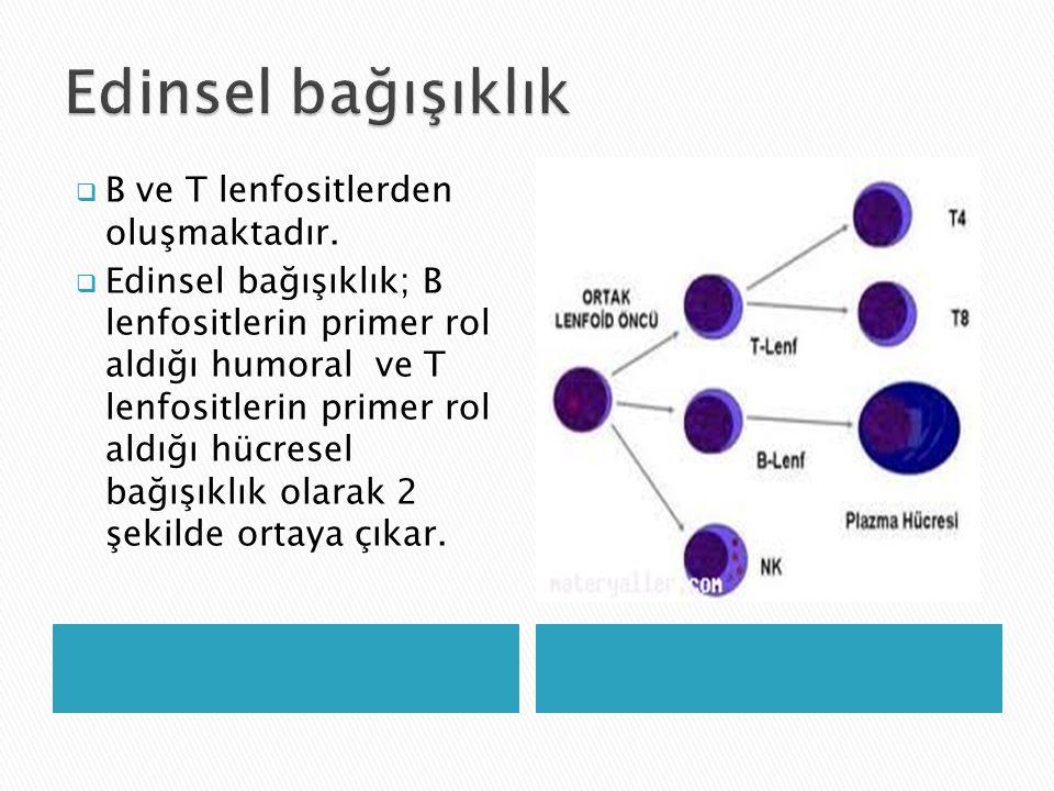 Edinsel bağışıklık B ve T lenfositlerden oluşmaktadır.