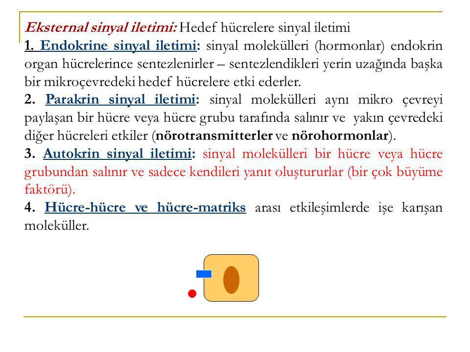 Eksternal sinyal iletimi: Hedef hücrelere sinyal iletimi