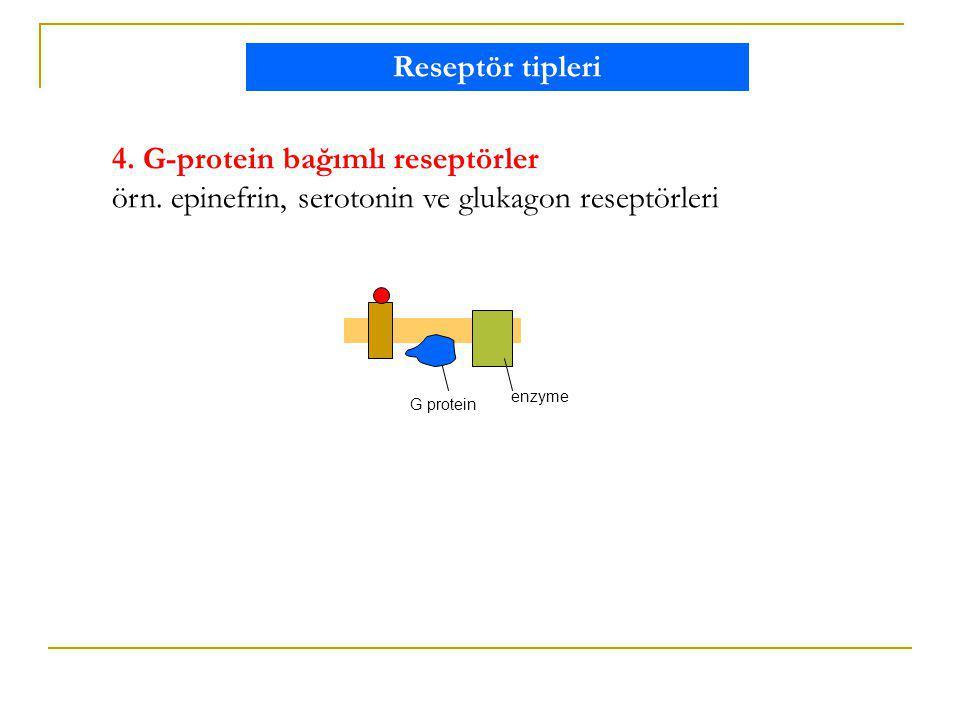 4. G-protein bağımlı reseptörler