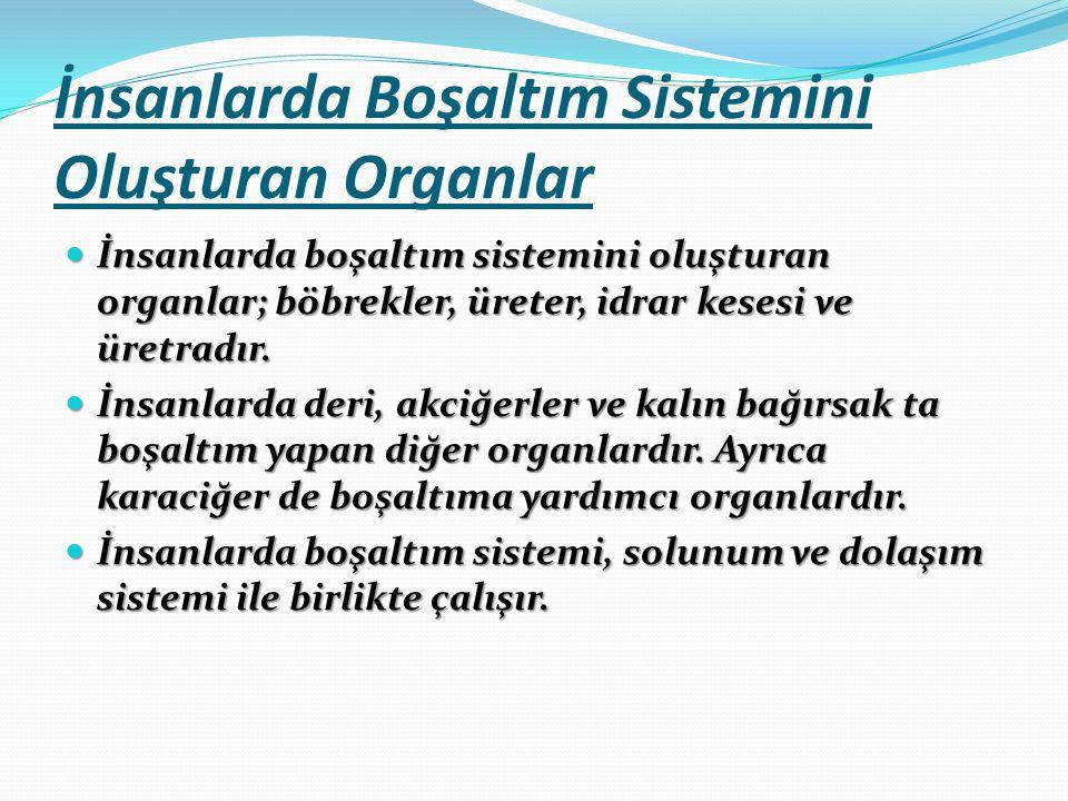 İnsanlarda Boşaltım Sistemini Oluşturan Organlar