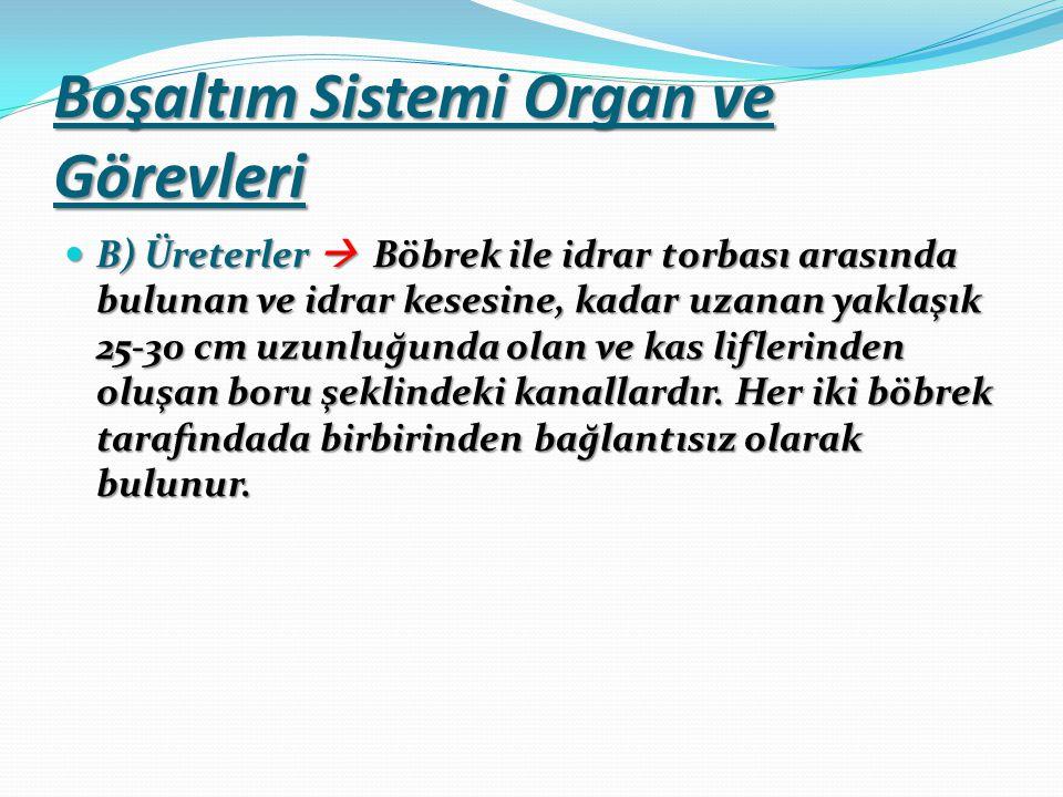 Boşaltım Sistemi Organ ve Görevleri