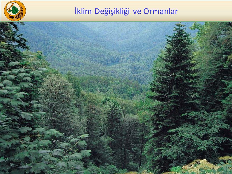 İklim Değişikliği ve Ormanlar