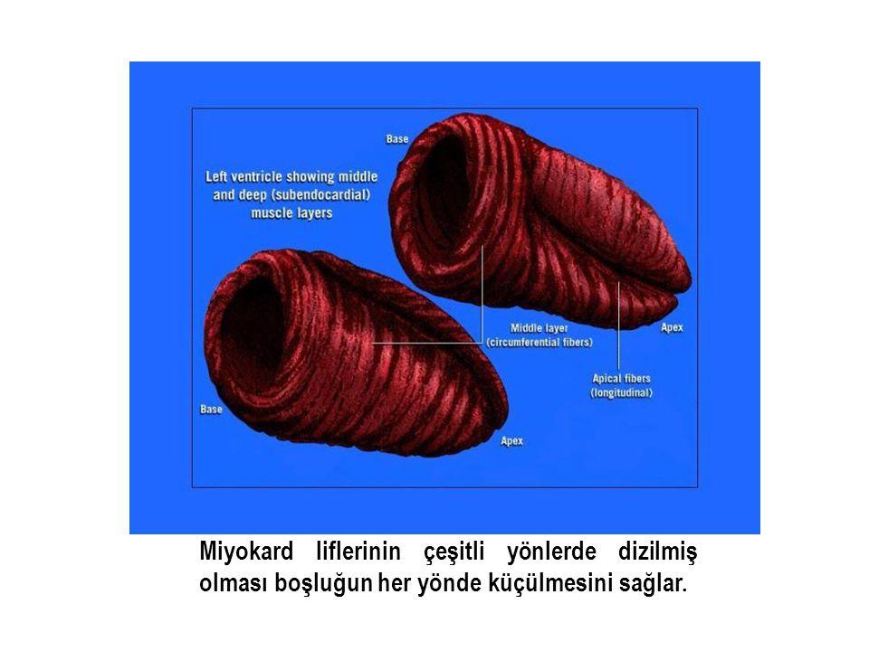 Miyokard liflerinin çeşitli yönlerde dizilmiş olması boşluğun her yönde küçülmesini sağlar.