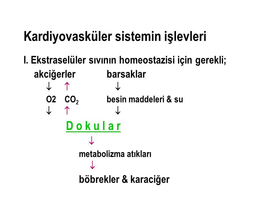 Kardiyovasküler sistemin işlevleri