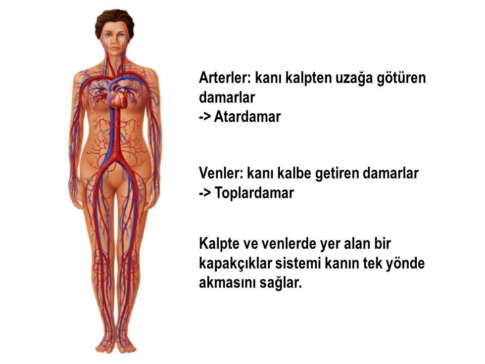 Arterler: kanı kalpten uzağa götüren damarlar