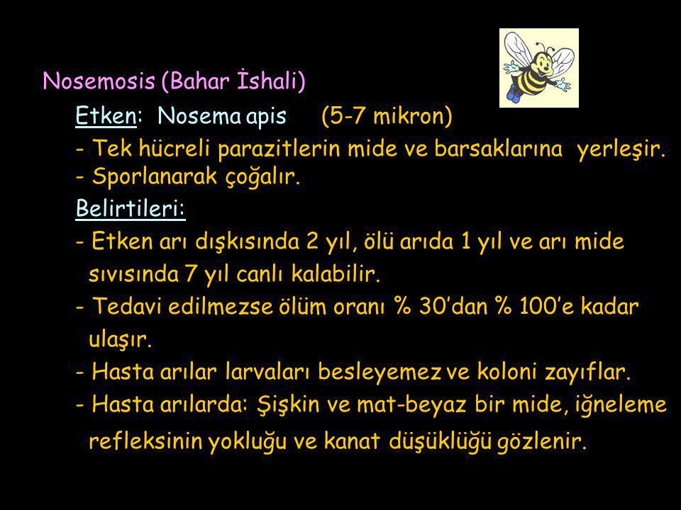 Nosemosis (Bahar İshali)