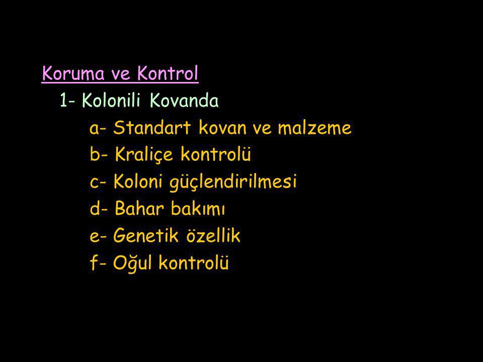 Koruma ve Kontrol 1- Kolonili Kovanda. a- Standart kovan ve malzeme. b- Kraliçe kontrolü. c- Koloni güçlendirilmesi.