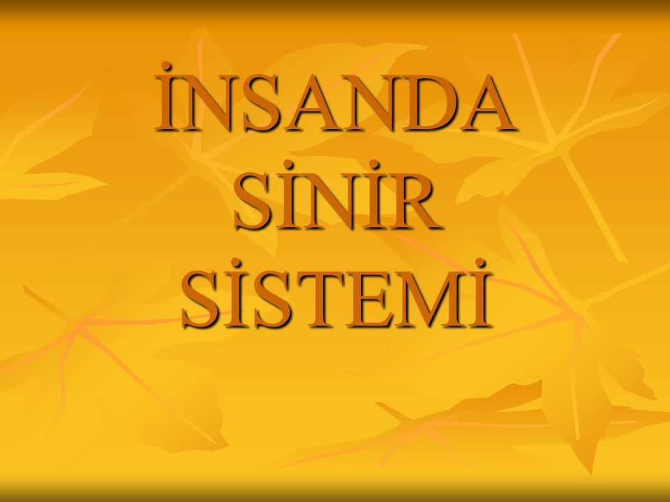 İNSANDA SİNİR SİSTEMİ