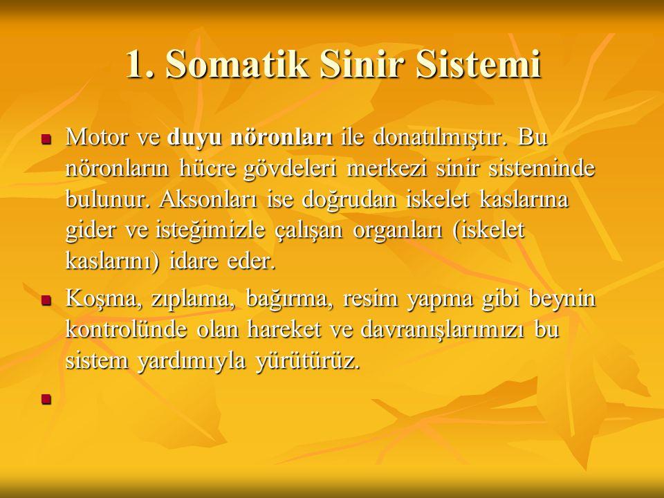1. Somatik Sinir Sistemi