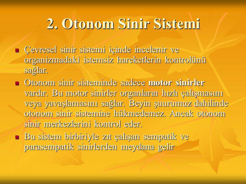 2. Otonom Sinir Sistemi Çevresel sinir sistemi içinde incelenir ve organizmadaki istemsiz hareketlerin kontrolünü sağlar.