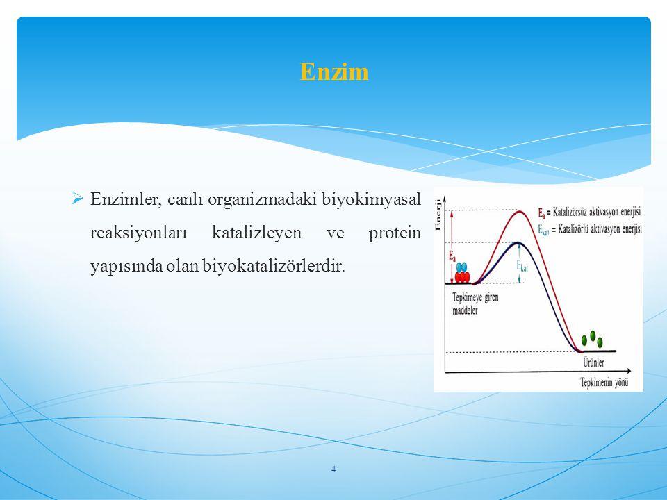 Enzim Enzimler, canlı organizmadaki biyokimyasal reaksiyonları katalizleyen ve protein yapısında olan biyokatalizörlerdir.