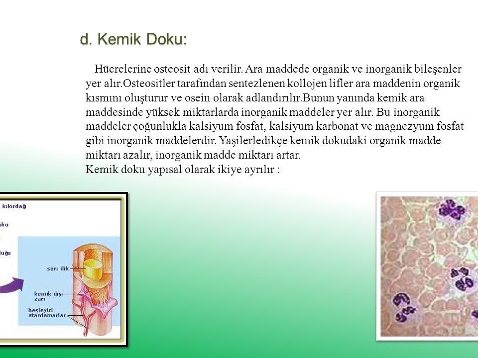 d. Kemik Doku: