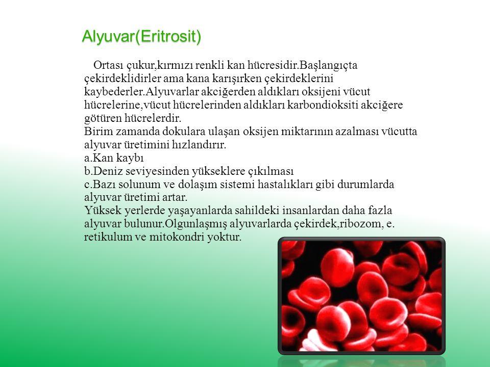 Alyuvar(Eritrosit)