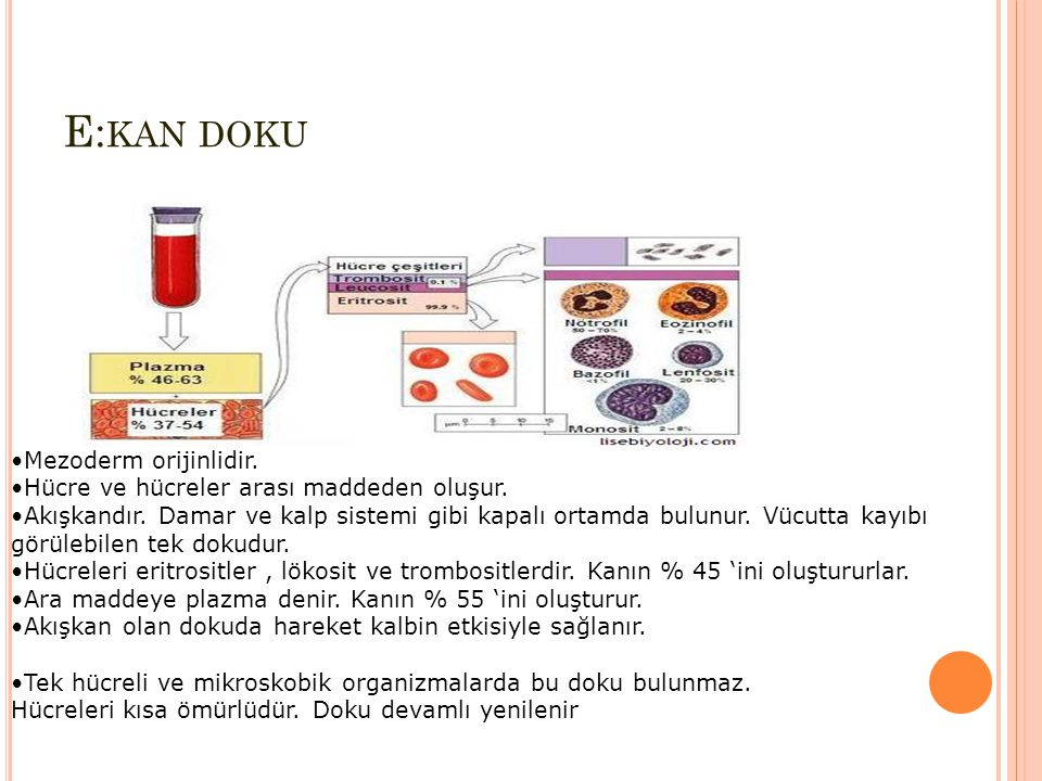 E:kan doku Mezoderm orijinlidir.