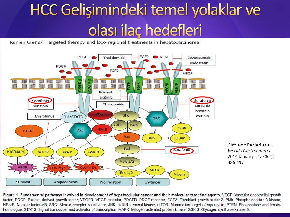 HCC Gelişimindeki temel yolaklar ve olası ilaç hedefleri