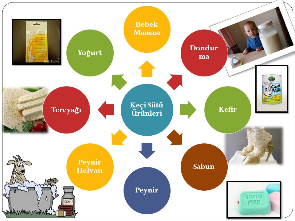 Keçi Sütü Ürünleri Bebek Maması Dondurma Kefir Sabun Peynir Peynir Helvası Tereyağı Yoğurt