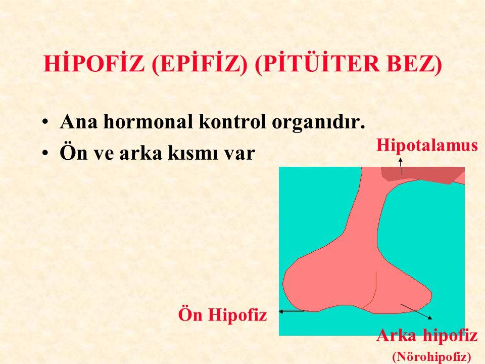 HİPOFİZ (EPİFİZ) (PİTÜİTER BEZ)