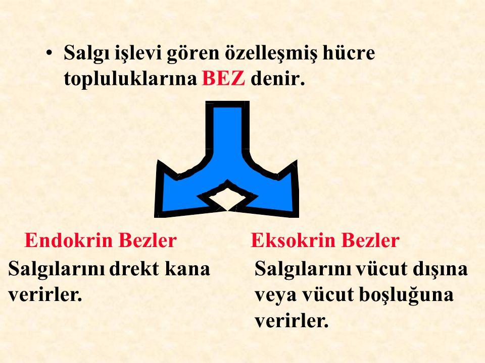 Salgı işlevi gören özelleşmiş hücre topluluklarına BEZ denir.