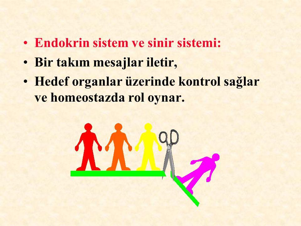 Endokrin sistem ve sinir sistemi: