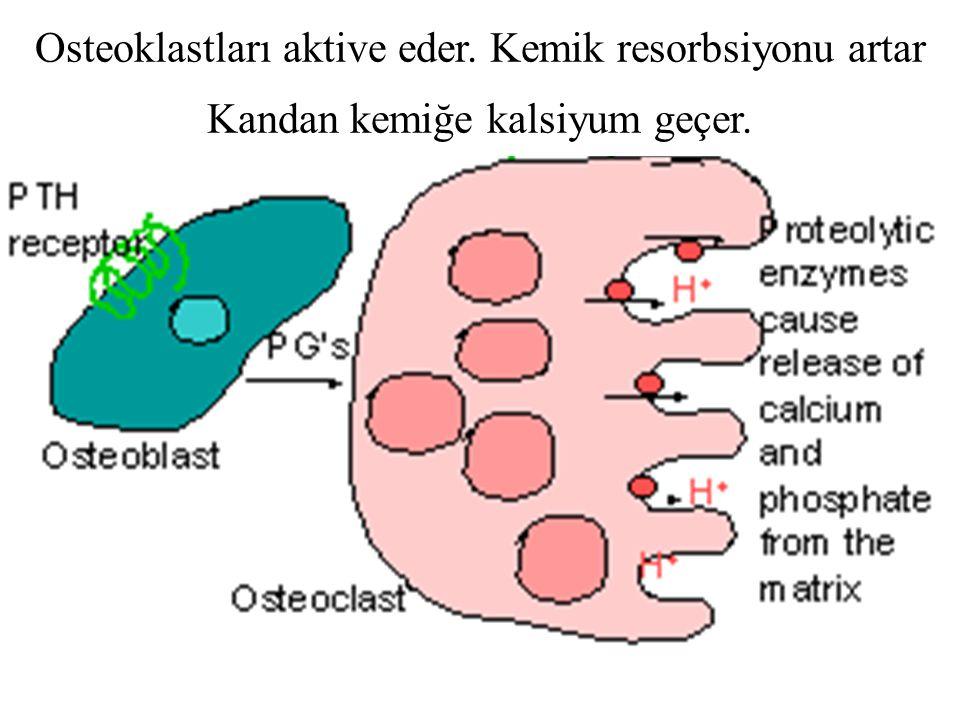Osteoklastları aktive eder. Kemik resorbsiyonu artar