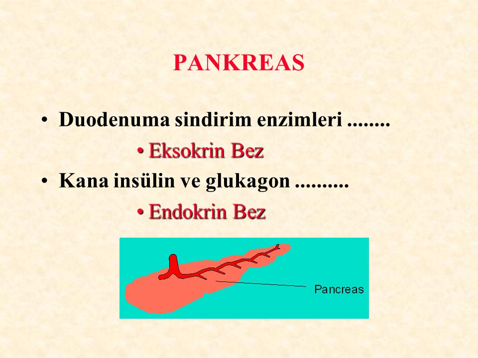 PANKREAS Duodenuma sindirim enzimleri ........ Eksokrin Bez