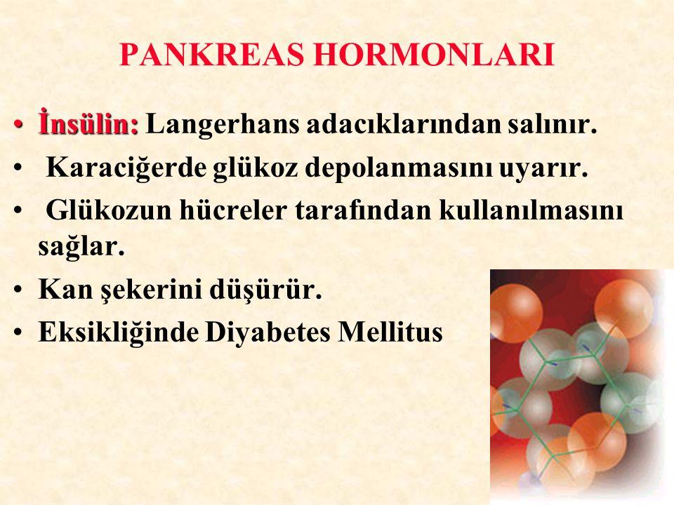 PANKREAS HORMONLARI İnsülin: Langerhans adacıklarından salınır.