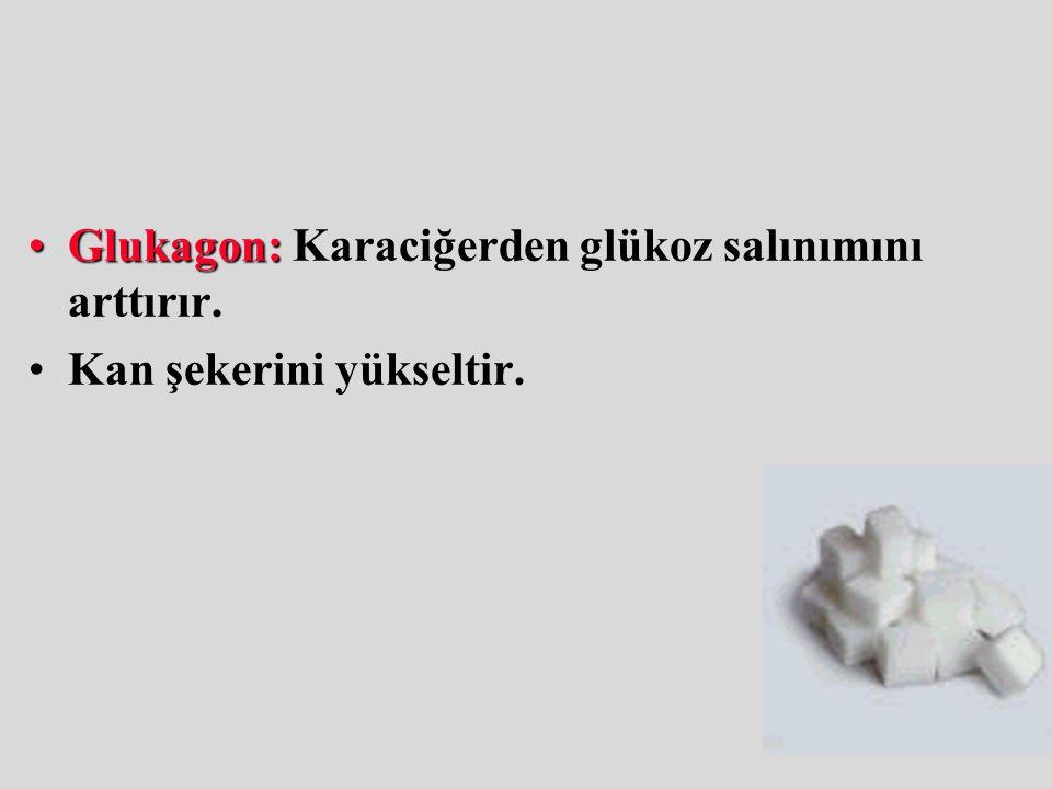 Glukagon: Karaciğerden glükoz salınımını arttırır.
