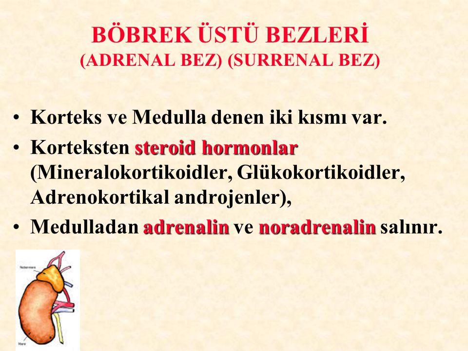 BÖBREK ÜSTÜ BEZLERİ (ADRENAL BEZ) (SURRENAL BEZ)