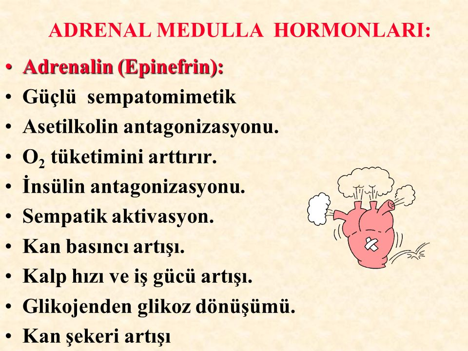 ADRENAL MEDULLA HORMONLARI: