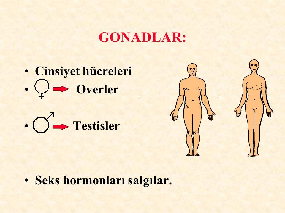 GONADLAR: Cinsiyet hücreleri Overler Testisler