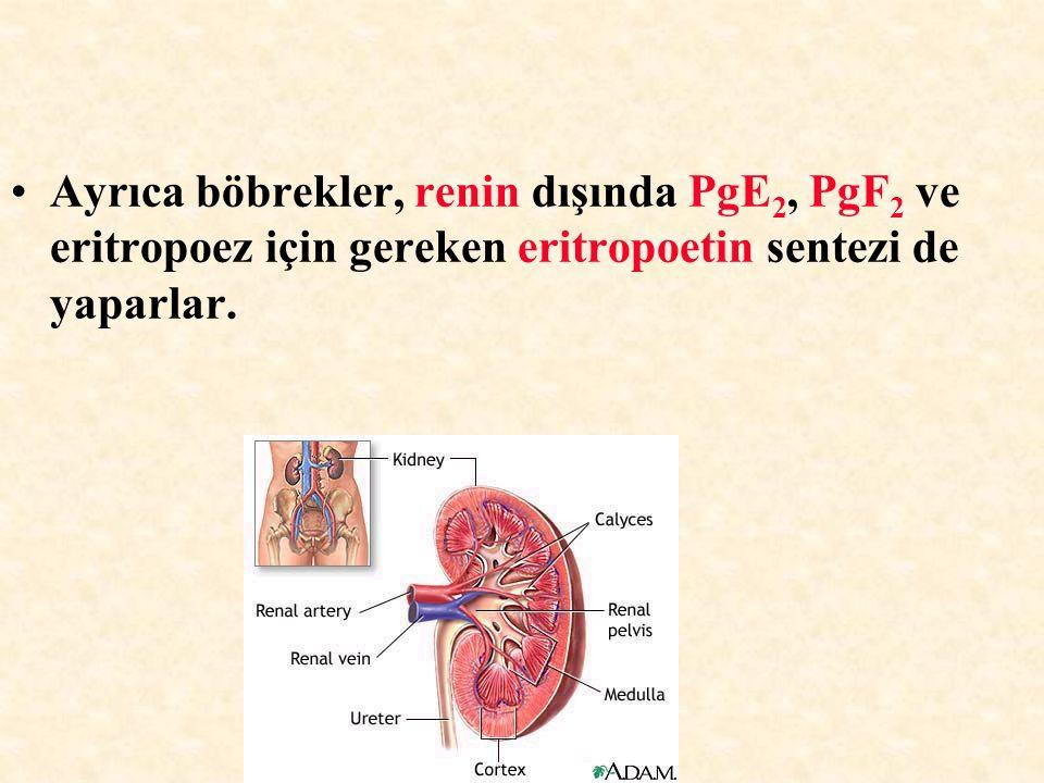Ayrıca böbrekler, renin dışında PgE2, PgF2 ve eritropoez için gereken eritropoetin sentezi de yaparlar.