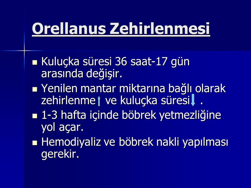 Orellanus Zehirlenmesi