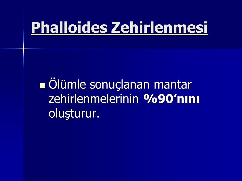 Phalloides Zehirlenmesi