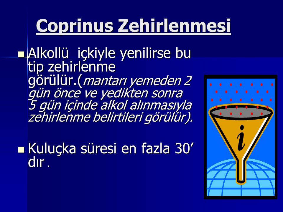 Coprinus Zehirlenmesi