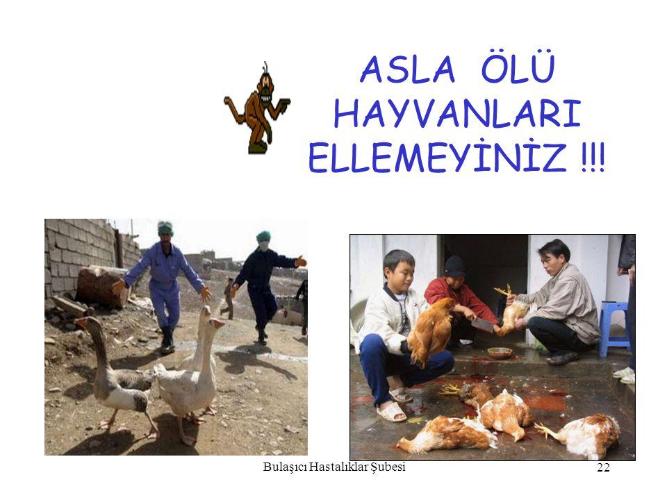 ASLA ÖLÜ HAYVANLARI ELLEMEYİNİZ !!!