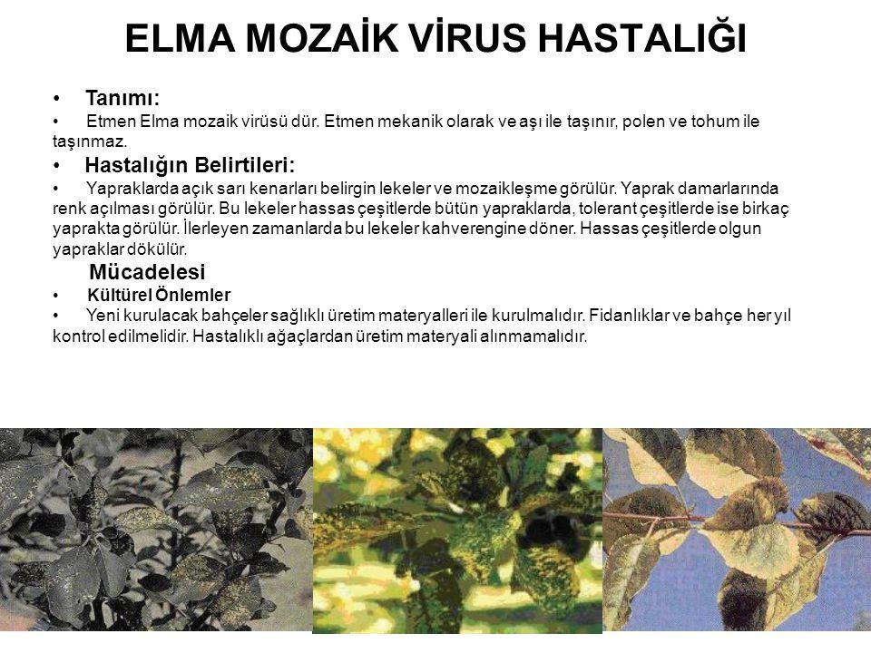 ELMA MOZAİK VİRUS HASTALIĞI