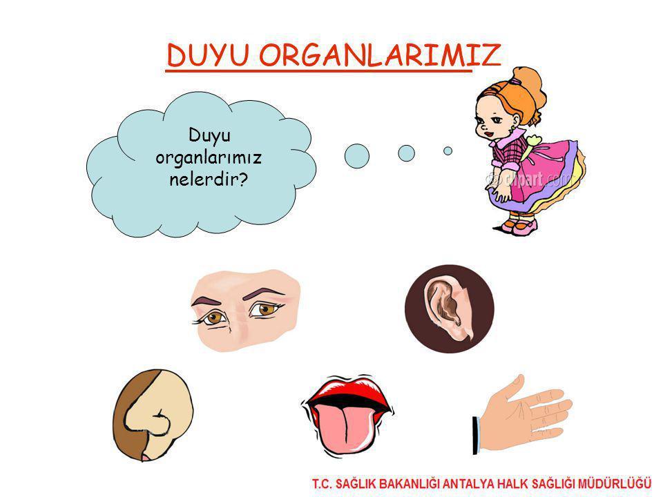 Duyu organlarımız nelerdir