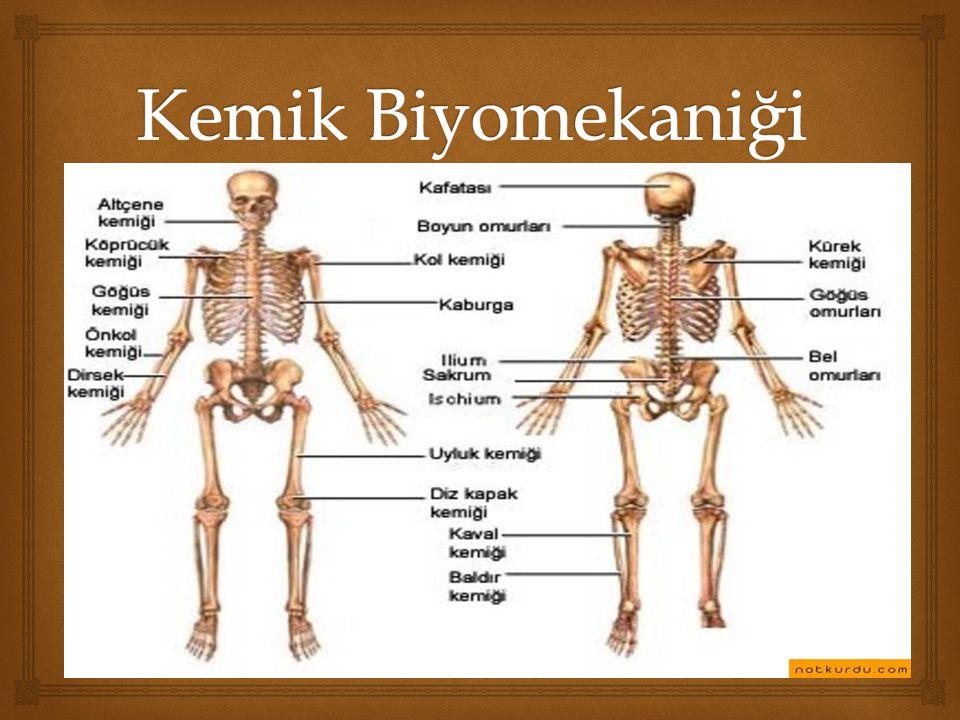 Kemik Biyomekaniği
