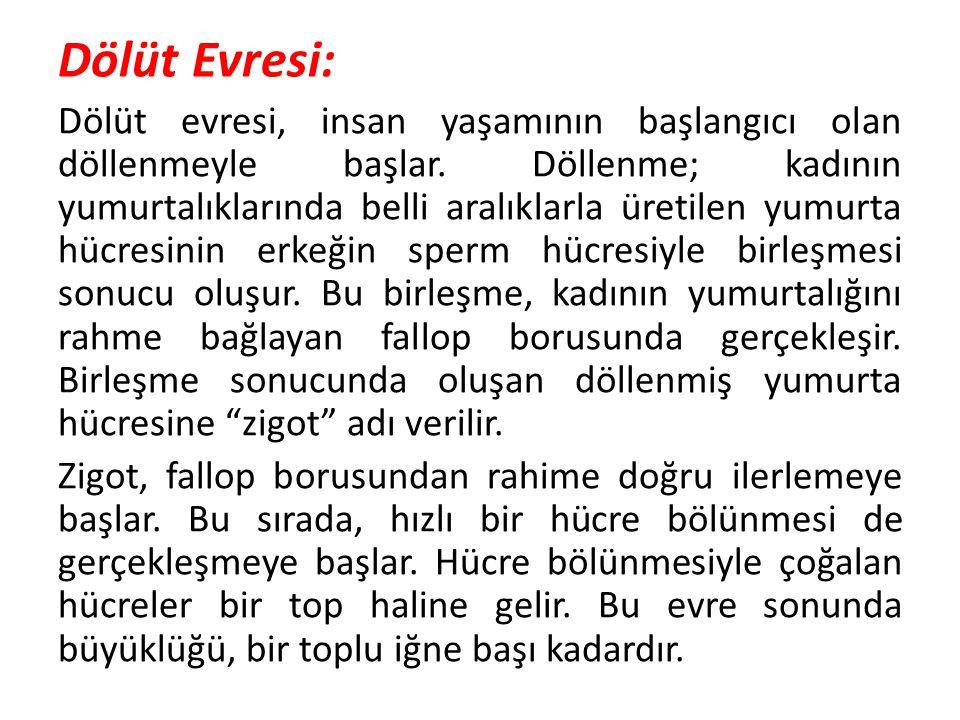 Dölüt Evresi: