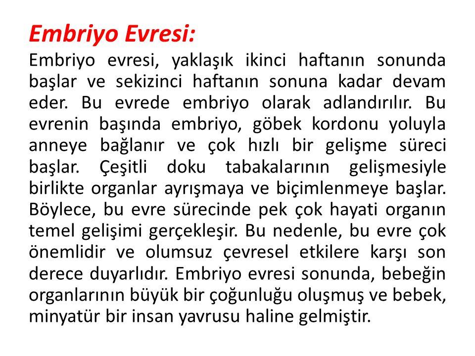 Embriyo Evresi: