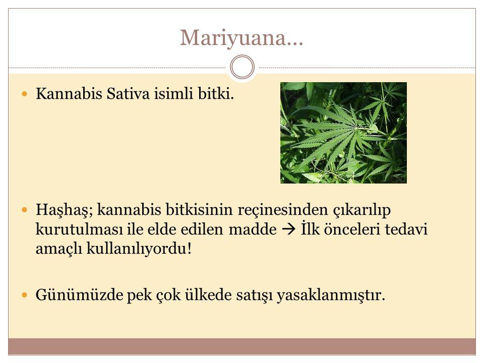 Mariyuana… Kannabis Sativa isimli bitki.