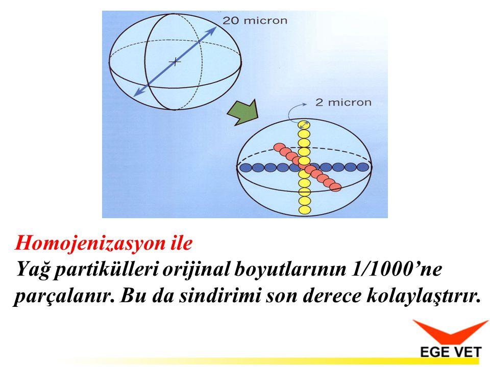 Homojenizasyon ile Yağ partikülleri orijinal boyutlarının 1/1000'ne parçalanır.