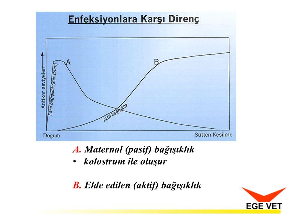 A. Maternal (pasif) bağışıklık