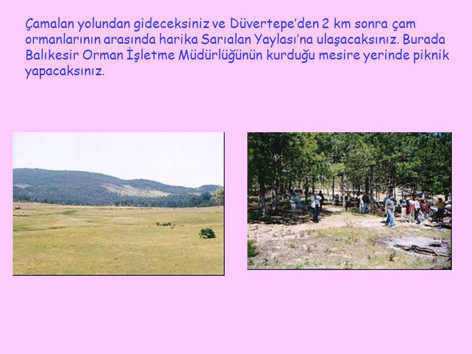 Çamalan yolundan gideceksiniz ve Düvertepe'den 2 km sonra çam ormanlarının arasında harika Sarıalan Yaylası'na ulaşacaksınız.